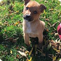 Adopt A Pet :: Rosie - Saskatoon, SK