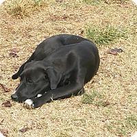 Adopt A Pet :: Tootsie - guthrie, OK