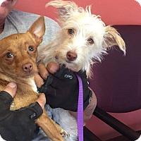 Adopt A Pet :: Poppy - Brea, CA