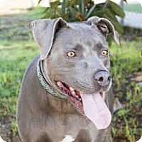 Adopt A Pet :: Dayo - Agoura, CA