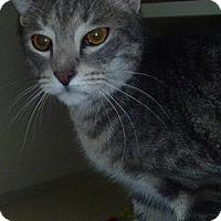 Adopt A Pet :: Rice - Hamburg, NY