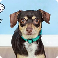Adopt A Pet :: Danny - Lee's Summit, MO