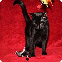 Adopt A Pet :: Jasper (Neutered) - Marietta, OH