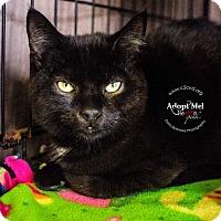 Adopt A Pet :: A..  Shadow - Mooresville, NC