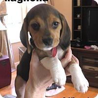 Adopt A Pet :: Melody's pup 'Magnolia' - Tampa, FL