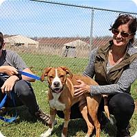 Adopt A Pet :: Mr. Peabody - Elyria, OH