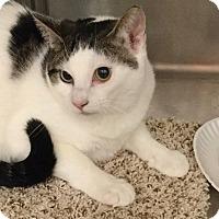 Adopt A Pet :: Gem - Colmar, PA