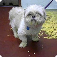Adopt A Pet :: CRICKET - Atlanta, GA