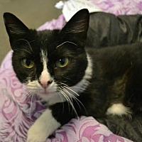 Adopt A Pet :: Babushka *Special Adoption Fee - Akron, OH
