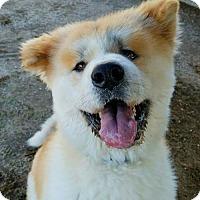 Adopt A Pet :: Takuya - Romoland, CA