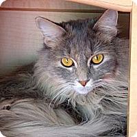 Adopt A Pet :: Itsy - Escondido, CA
