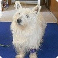 Adopt A Pet :: Zoey - Wellington, OH