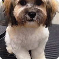 Adopt A Pet :: Neddy - Dover, MA