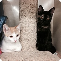 Adopt A Pet :: Olaf and Elsa - Chandler, AZ