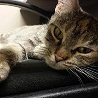 Adopt A Pet :: Clover - Grand Blanc, MI
