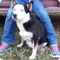 Adopt A Pet :: Panda--arriving soon - Chichester, NH