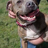 Adopt A Pet :: Priscilla - Dayton, OH