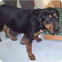 Adopt A Pet :: Nyla - Scottsdale, AZ