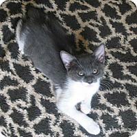 Adopt A Pet :: Zoom Zoom - Acworth, GA