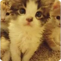 Adopt A Pet :: Chung Lee - Warren, OH