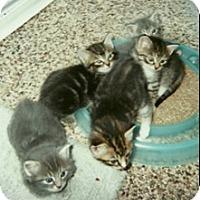 Adopt A Pet :: KITTENS - Warren, OH