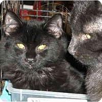 Adopt A Pet :: Onyx & Mattie - Riverside, RI