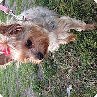 Adopt A Pet :: Gia - Leesburg, FL