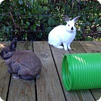 Adopt A Pet :: JERI - West Palm Beach, FL