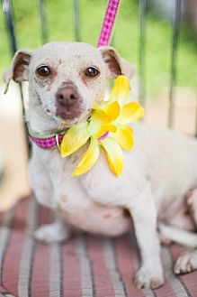 Terrier (Unknown Type, Medium) Mix Dog for adoption in Fresno, California - Sunkist