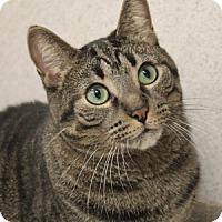 Adopt A Pet :: Tabitha - Naperville, IL