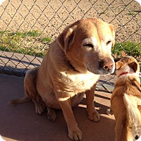 Adopt A Pet :: Munchie - Phoenix, AZ