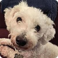 Adopt A Pet :: Randy - La Costa, CA