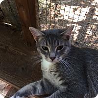Adopt A Pet :: Pixie (CL) - Alpharetta, GA