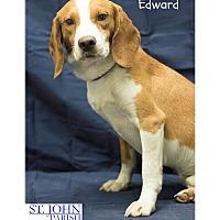 Adopt A Pet :: Eddie - Laplace, LA