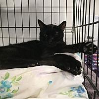 Adopt A Pet :: Katie - Fallbrook, CA