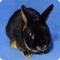 Adopt A Pet :: Elmer - Woburn, MA