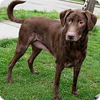Adopt A Pet :: Javo - New Kensington, PA