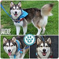 Adopt A Pet :: Wolf - Kimberton, PA