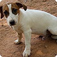 Adopt A Pet :: Lark - hartford, CT