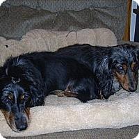 Adopt A Pet :: Sara & Sasha - Morristown, TN