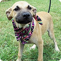 Adopt A Pet :: BUFFY - Glastonbury, CT