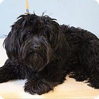 Adopt A Pet :: Andy - Shawnee Mission, KS