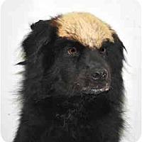 Adopt A Pet :: Zoi - Port Washington, NY