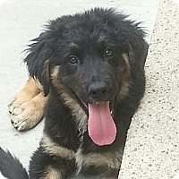 Adopt A Pet :: Jasper*ADOPTED!* - Chicago, IL