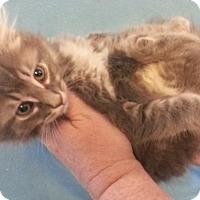 Adopt A Pet :: Breezy - Centralia, WA