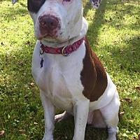 Adopt A Pet :: Molly - Churchville, NY