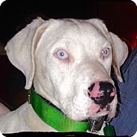 Adopt A Pet :: Zeus - Bastrop, TX