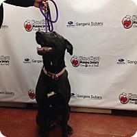 Adopt A Pet :: Bellah - Tehachapi, CA
