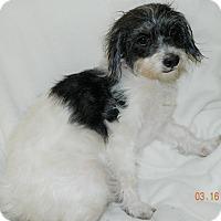 Adopt A Pet :: Pandy - Umatilla, FL