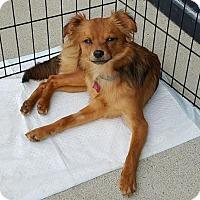 Adopt A Pet :: Amos - Nicholasville, KY